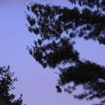 Blick in den Abendhimmel